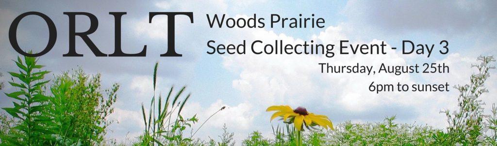 Woods prairie flowers and sky