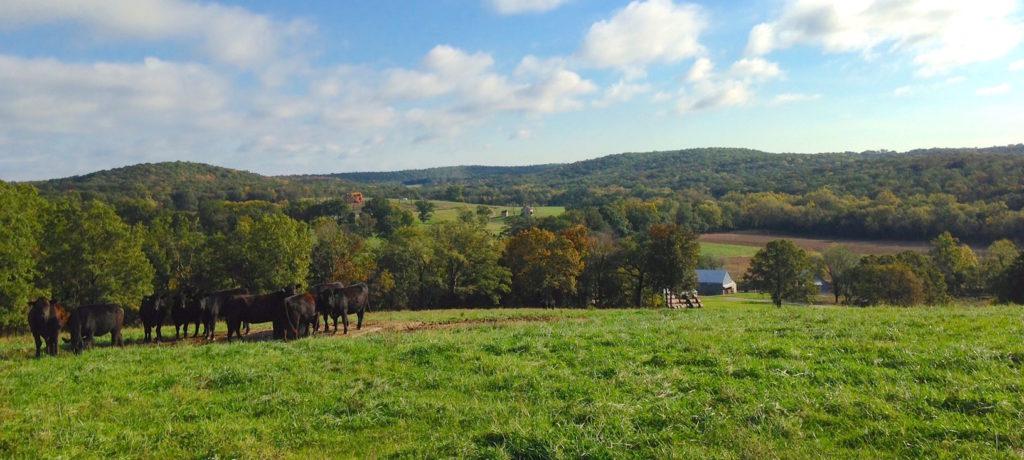 Rolling Ozark Hills on a small cattle farm near Gsconade River